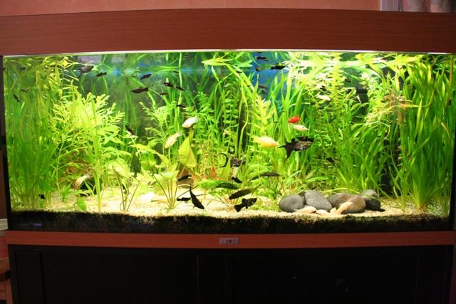Invasion d'algues Img_6311