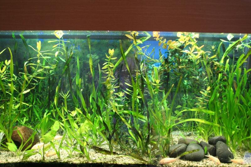 Invasion d'algues Img_6612