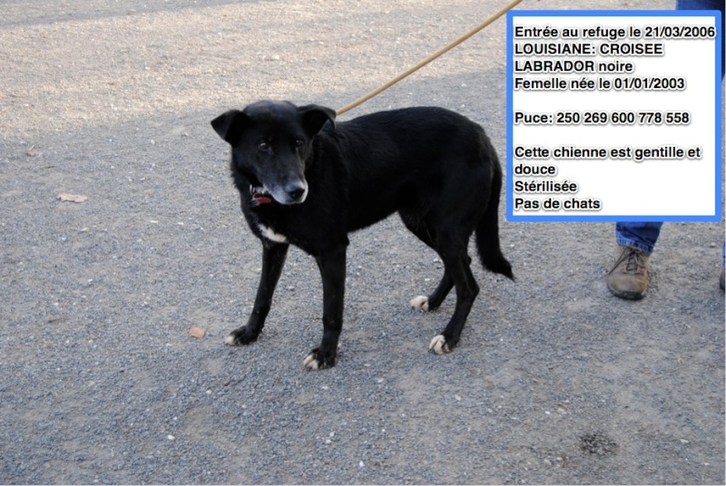 Des nouvelles des chiens partis en novembre 2011 vers l'Allemagne Louisi10