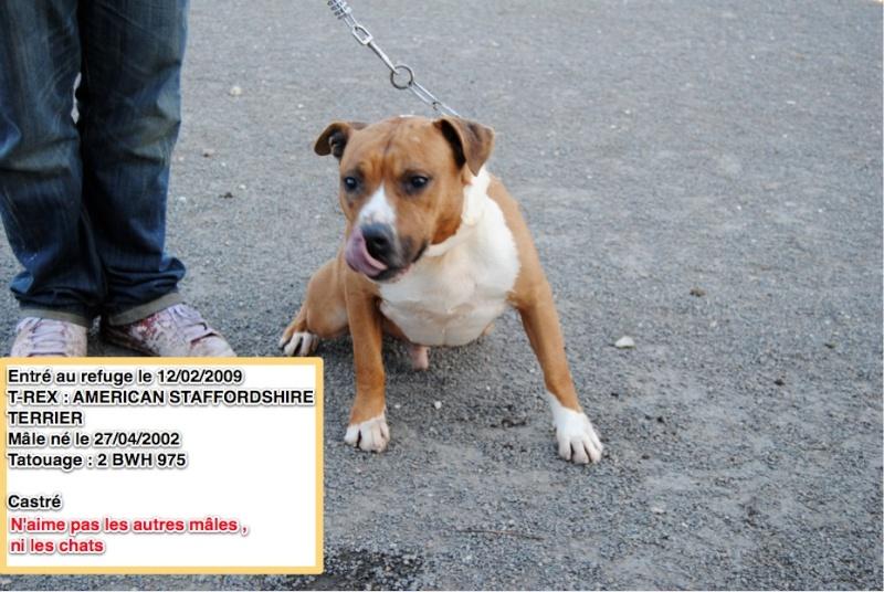 Des nouvelles des chiens partis en novembre 2011 vers l'Allemagne T-rex10