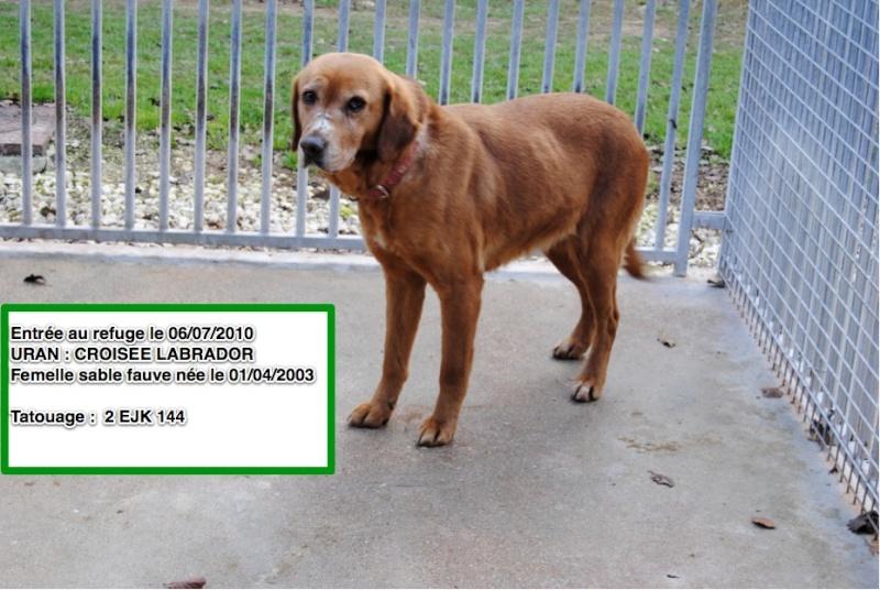 Des nouvelles des chiens partis en novembre 2011 vers l'Allemagne Uran10