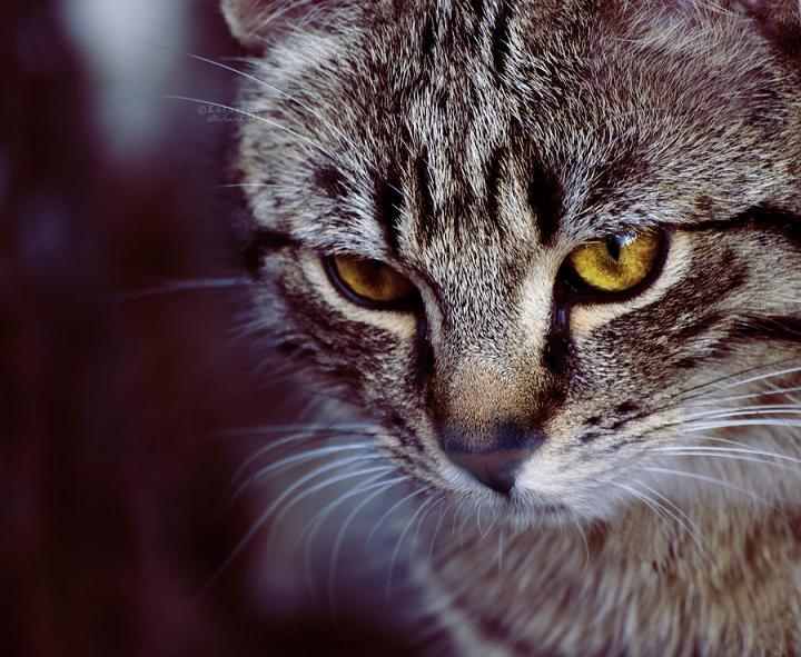 Petit Requiem >> Nuage de Requiem  { RÉUSSI } Cat_by11