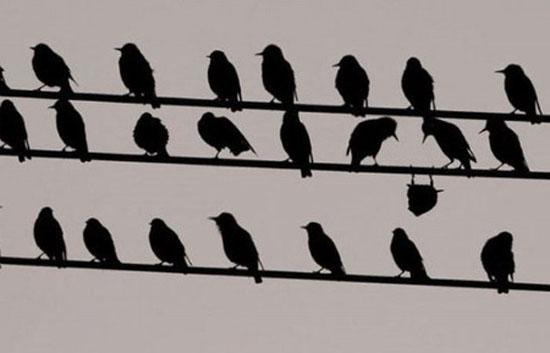 ПРАШАЊА И ОДГОВОРИ - Page 10 Bird10