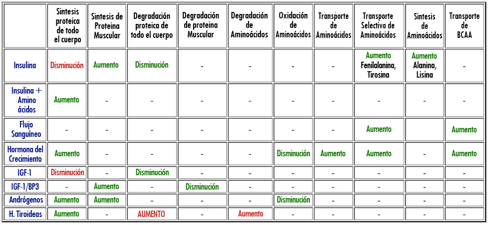 [Aporte]Metabolismo proteico - Como distintas hormonas producen un entorno anabolico Tabla_10