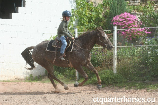 ATTRACTA REMEDYS appaloosa mare  - Page 2 25538810