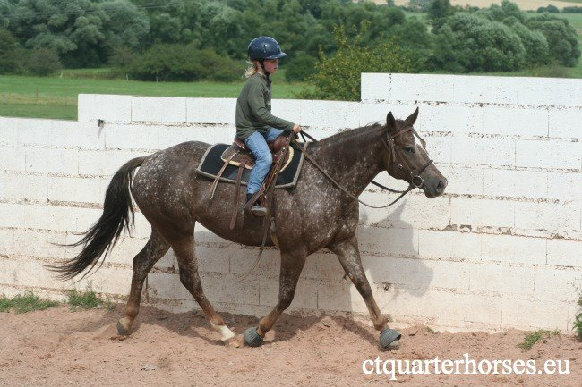 ATTRACTA REMEDYS appaloosa mare  - Page 2 26877010
