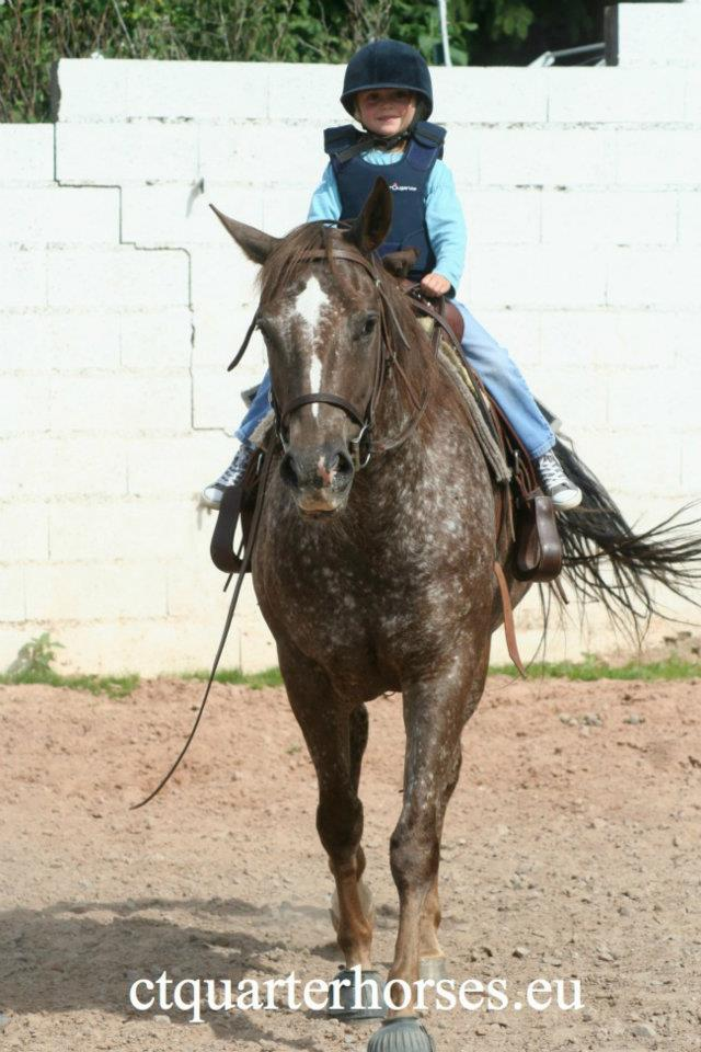 ATTRACTA REMEDYS appaloosa mare  - Page 2 40404110