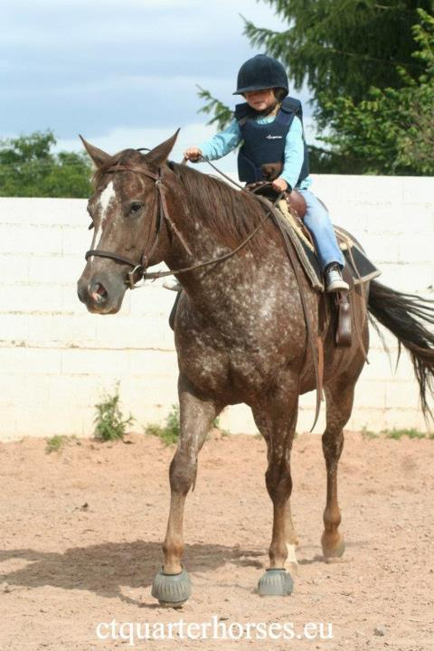 ATTRACTA REMEDYS appaloosa mare  - Page 2 55554310