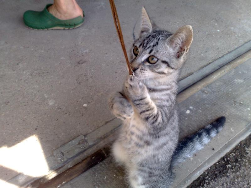 2 petits chatons males  09072011