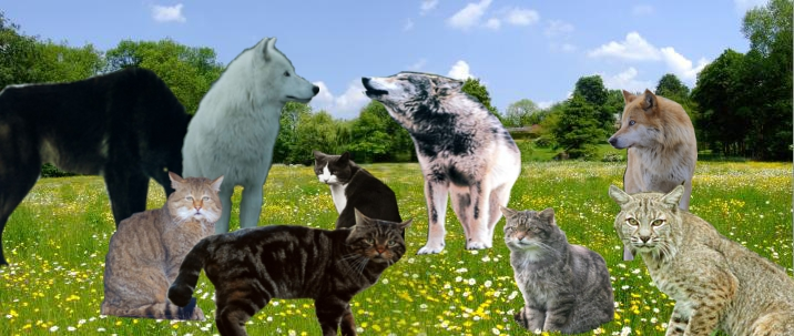 Warrior Cats & Warrior Dogs