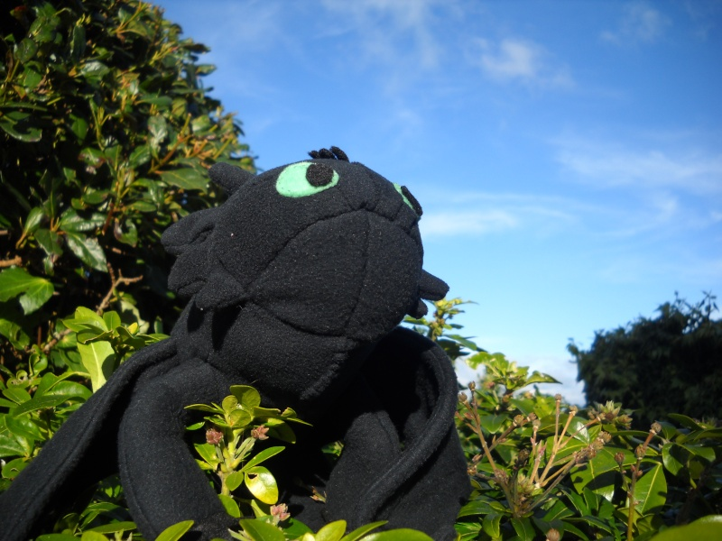 My Toothless Plushie Dscn1112