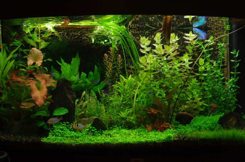 My Planted Vision 180 Imgp7810