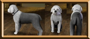 Собаки - Страница 6 Forum257