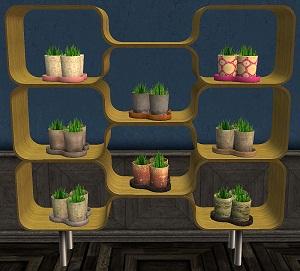 Цветы для дома - Страница 6 Forum707