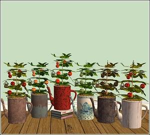 Цветы для дома - Страница 6 W-600h81