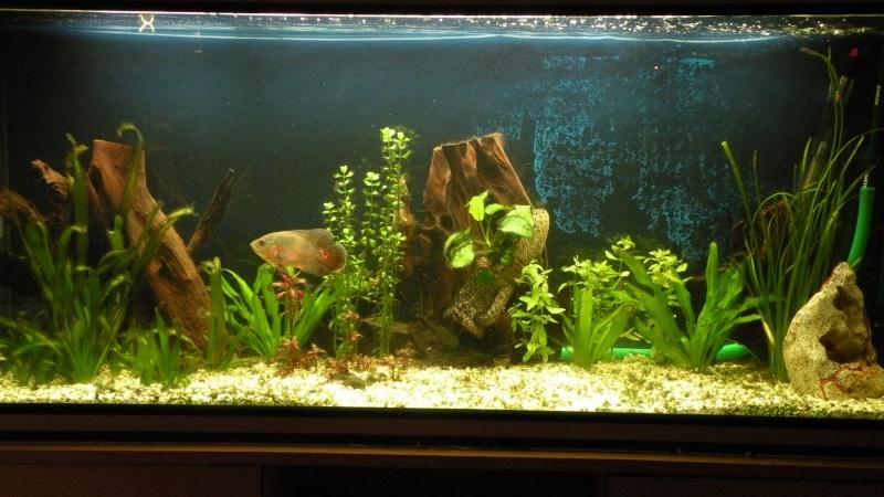 aquarium 475 litres du membre oscar - Page 2 Dscn8510