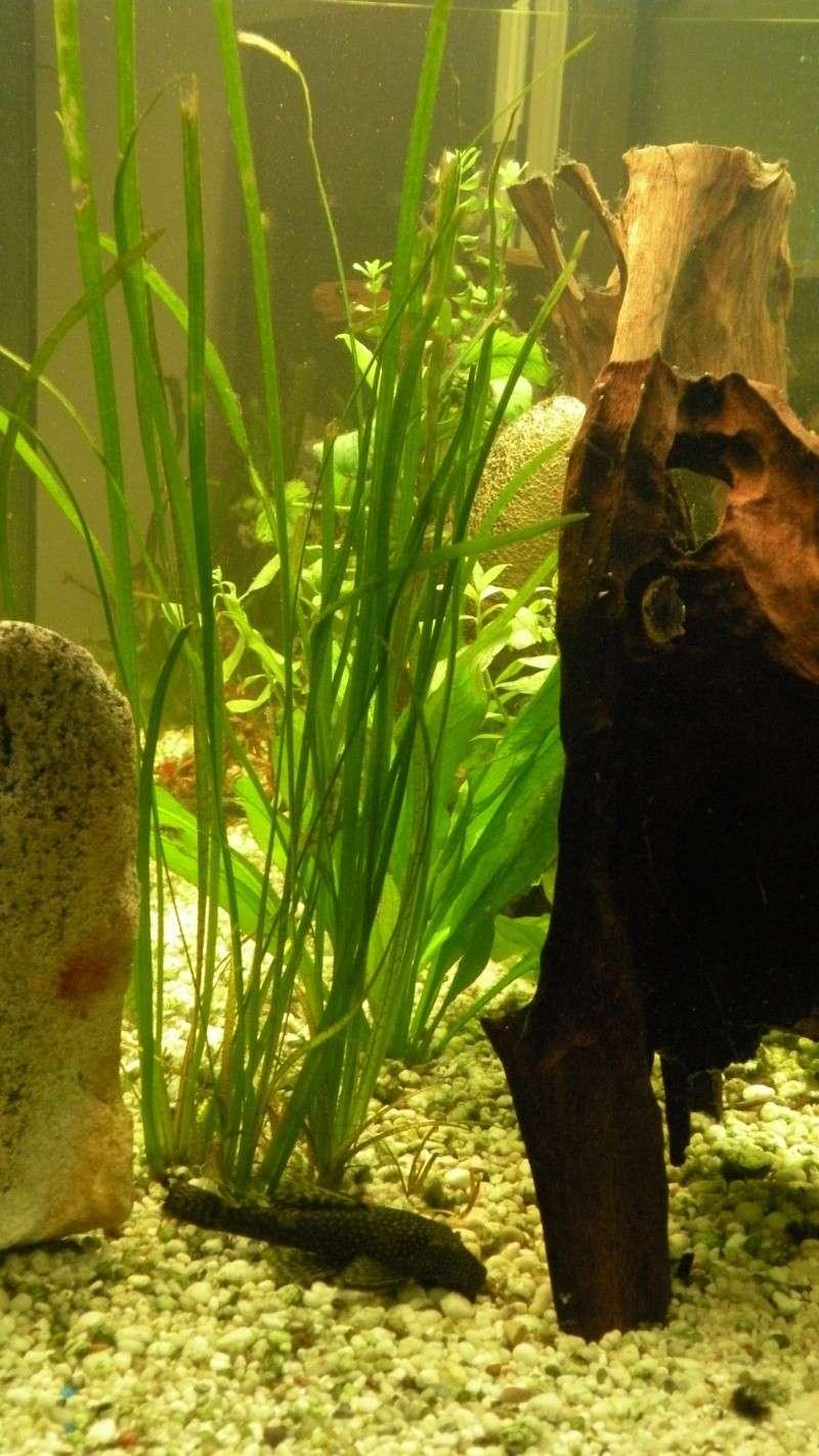 aquarium 475 litres du membre oscar - Page 2 Dscn8513