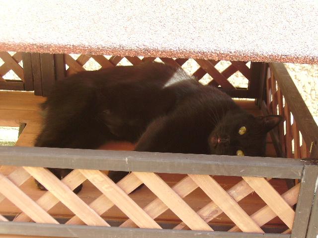 Kawa 2.5ans, handicapé...petit chat ...(presque) parfait^^ Kawa_110