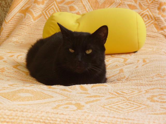 Kawa 2.5ans, handicapé...petit chat ...(presque) parfait^^ Kawa_310