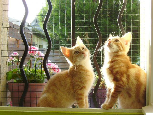 Deux coeurs d'amour, Twiggy l'aventurier au coeur tendre, et petit Tootsy la crème des crèmes Tootsy10