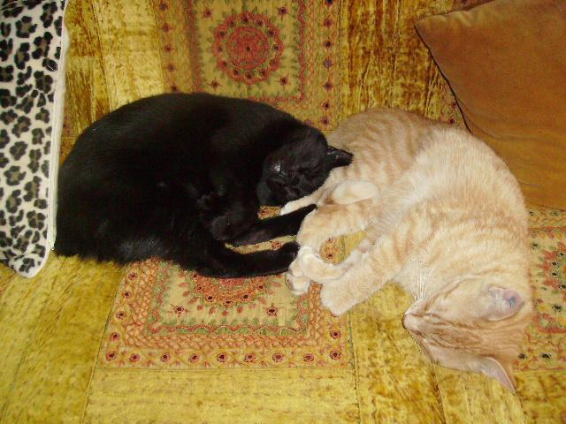 Deux coeurs d'amour, Twiggy l'aventurier au coeur tendre, et petit Tootsy la crème des crèmes Ying_e10