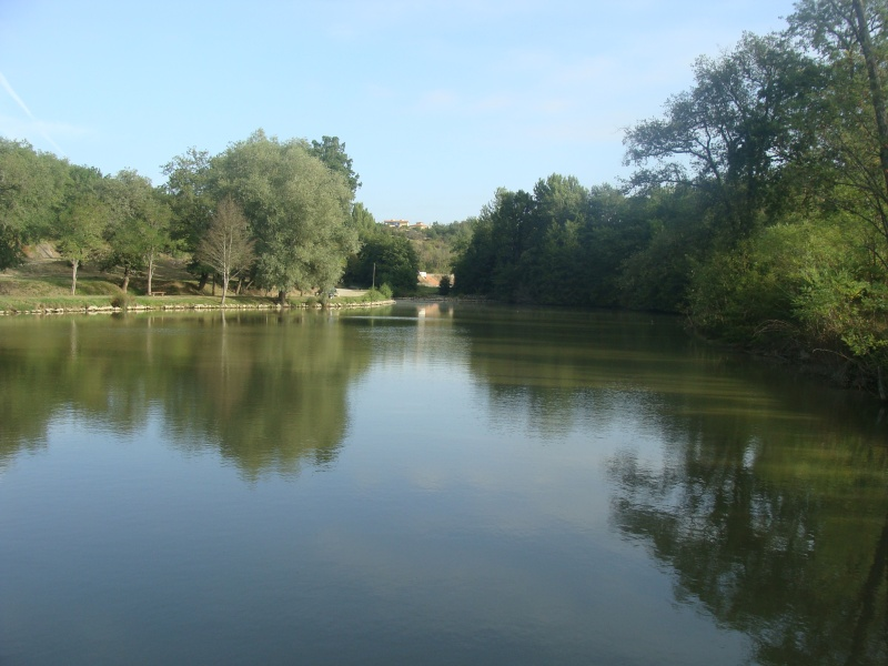 Mini Rasso midi pyrénées 14 15 16 sept  lac Rouffiac tolosan - Page 5 Dsc05751