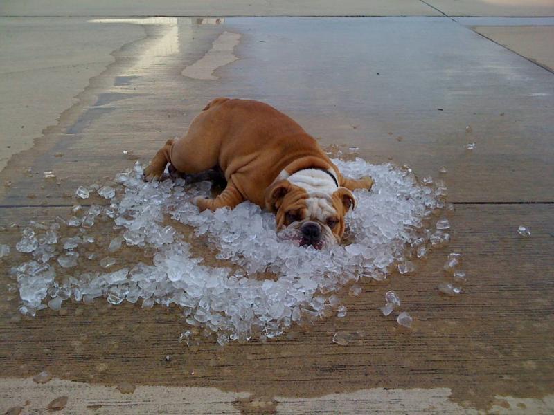 The dog days of summer... Hotdog11
