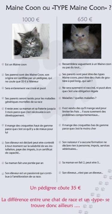 Différences entre chat de race, chat typé et chat de gouttière Photo110