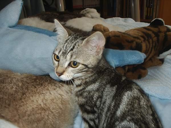 Spécials Photos : Avant/Après de nos chats - Page 3 Ashka010