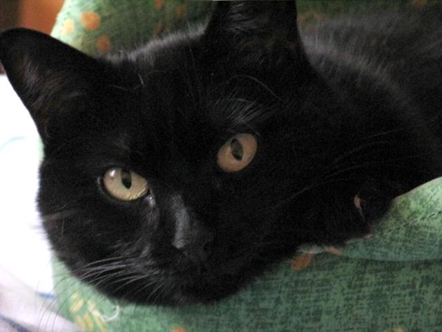 Spécials Photos : Avant/Après de nos chats - Page 3 Inuki012
