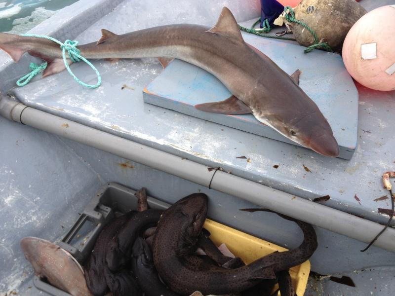 Shark Attack Photo_11