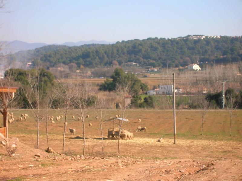 Salida Santa Perpètua- Castell de Guanta  Dscn3719