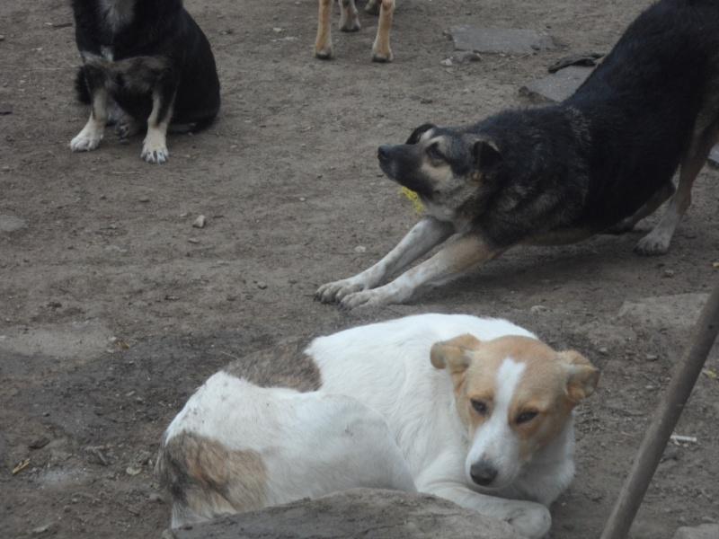 IAGOO FILS DE GEORGICA ET D'ANOUSHKA, né le 20 Aout 2010, parrainé par Babsu -SC-LBC- R- SOS -  - Page 2 Pictu162