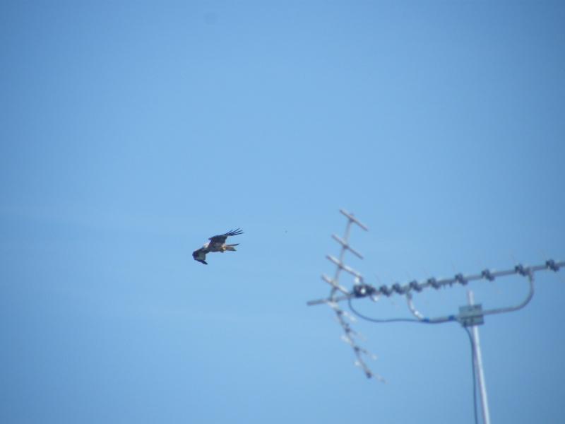 Birds of Prey Dscf2011