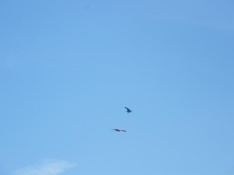 Birds of Prey Dscf2012