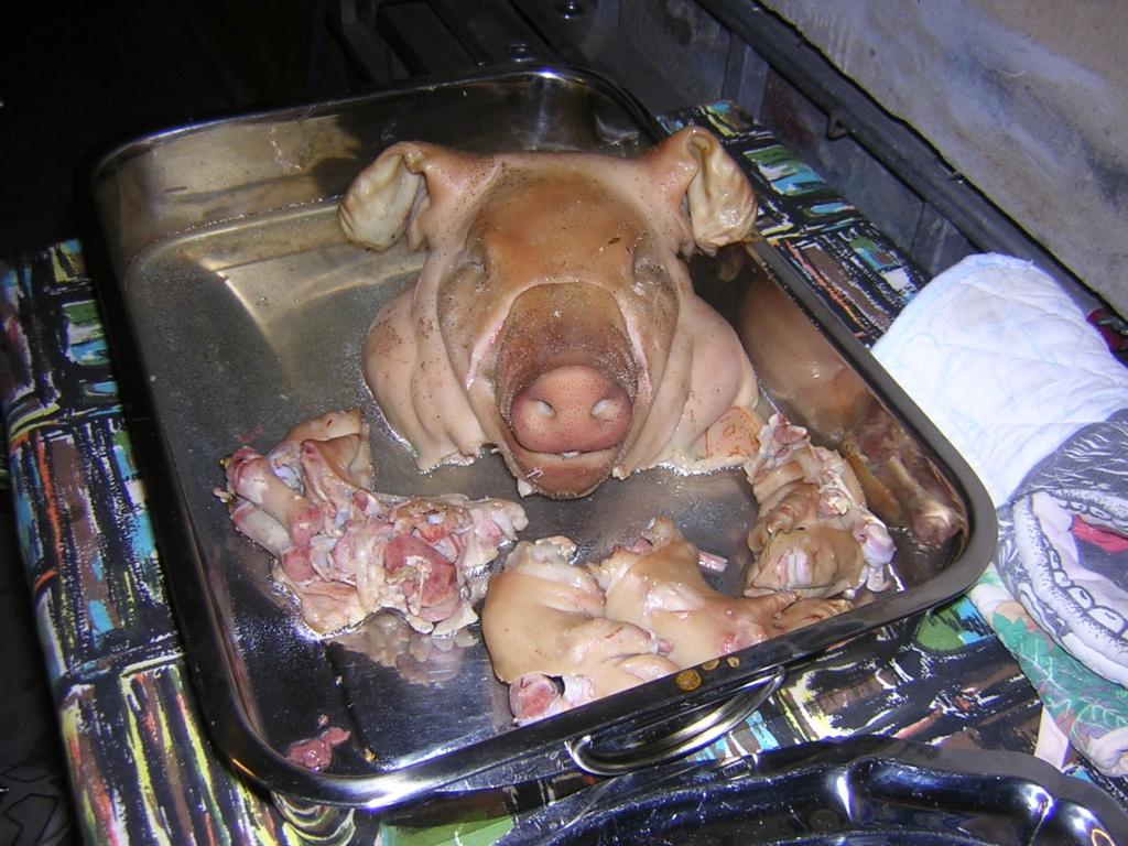 Retour de vacances en nez de cochon !! Cochon10
