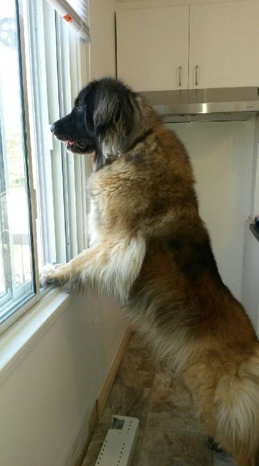Petit lexique pour mieux comprendre le comportement canin (humour) _conci11