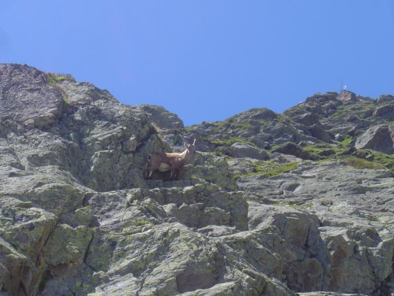La faune du massif Lacs_b11