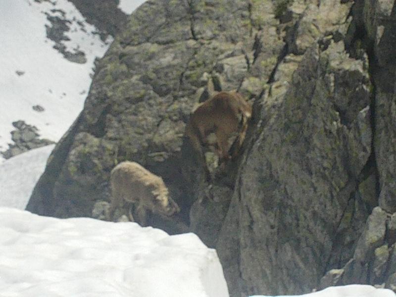 La faune du massif Lacs_b12