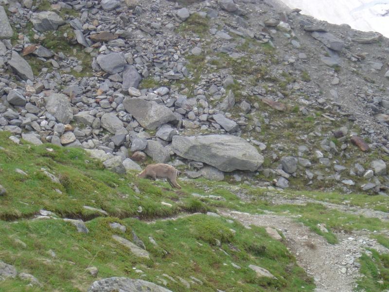 La faune du massif Nid_d_10