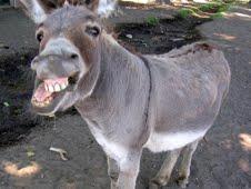 ဘုမသိ ဘမသိ နတ္ဆိုးဘဝ Donkey10