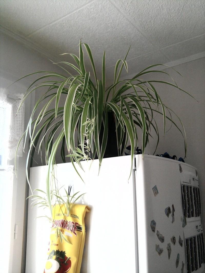 les plantes de Lelow Photo026