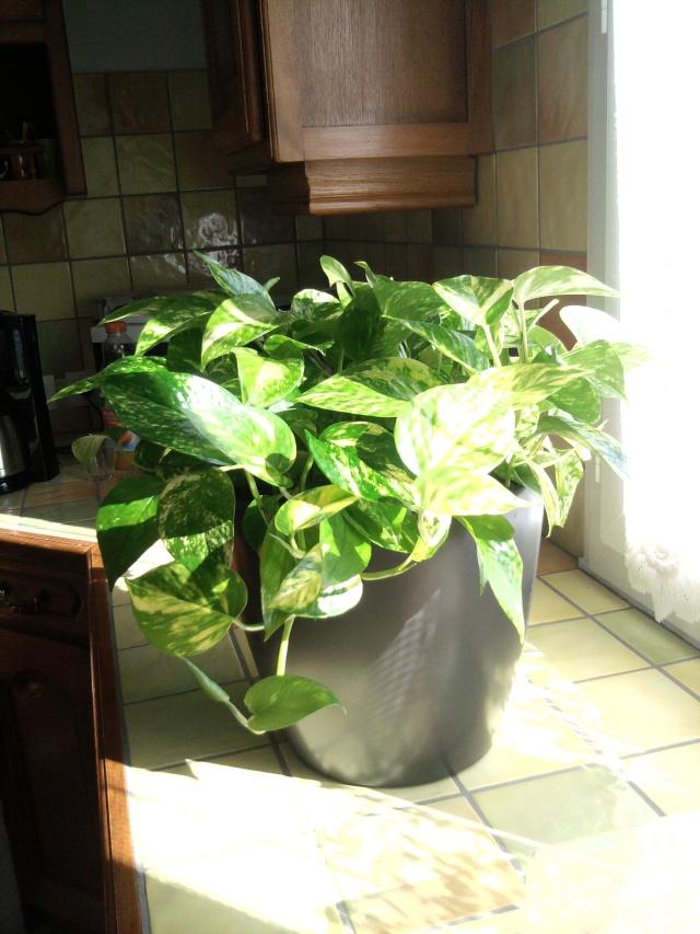 les plantes de Lelow Photo029