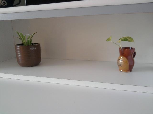 les plantes de Lelow Photo031