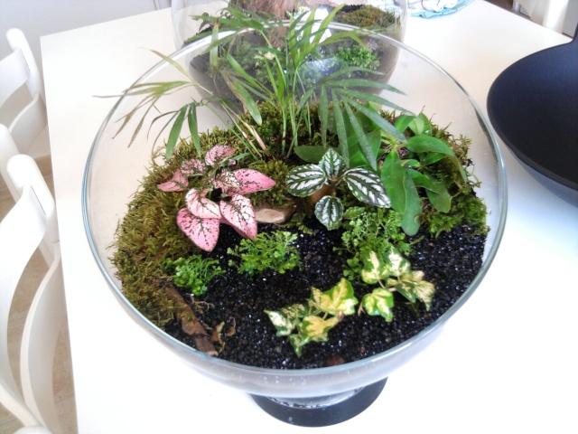 les plantes de Lelow Photo036