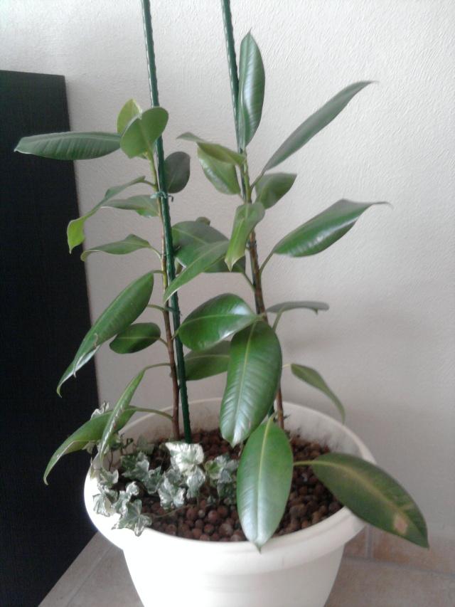 les plantes de Lelow Photo037