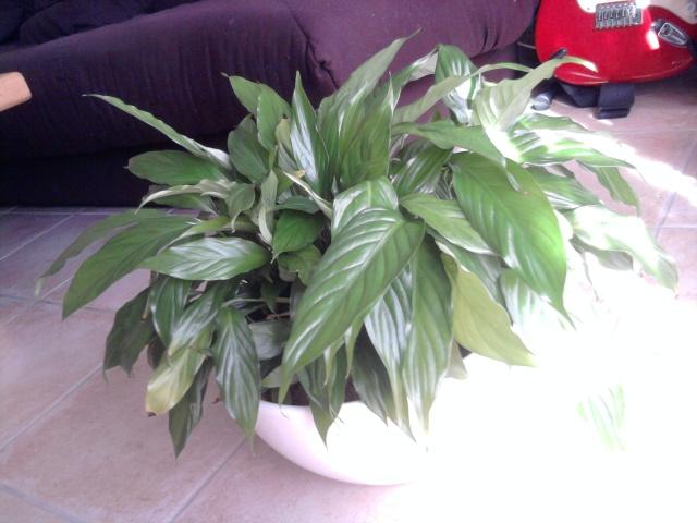 les plantes de Lelow Photo038