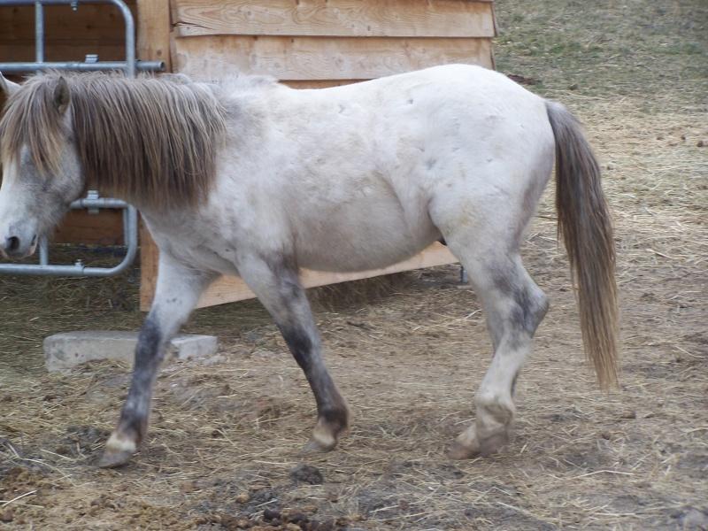 Vend cheval camargue  100_5811