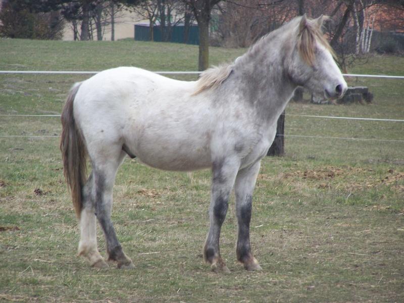 Vend cheval camargue  100_5812