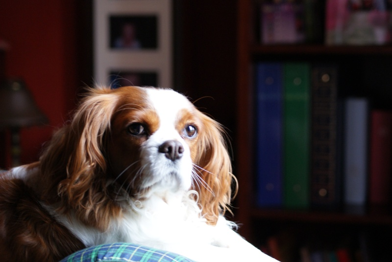 vos animaux de compagnie en photos - Page 2 Dsc00010